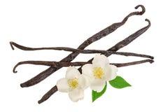 Wanilia wtyka z kwiatem i liściem odizolowywającymi na białym tle Odgórny widok Mieszkanie nieatutowy obraz royalty free