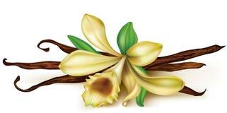 Waniliowa orchidea Fotografia Royalty Free