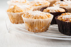 Waniliowi dyniowi muffins, torty kropiący z sproszkowanym cukierem Zdjęcie Royalty Free