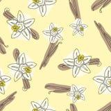 Waniliowy kija i kwiatu wektorowa ręka rysujący bezszwowy wzór Smaku okwitnięcia waniliowa ilustracja ilustracja wektor