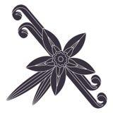 Waniliowy kwiat z ściegiem i liśćmi Pikantność dla kulinarnych produktów ilustracja wektor