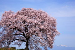 Wanitsuka κανένα sakura με Mt.Yatsugatake Στοκ Φωτογραφία