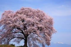 Wanitsuka no sakura with Mt.Yatsugatake Stock Photography