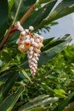 Wanli okręg, Nowy Taipei miasto, Tajwański Yehliu Geopark Dziki kwiat Obraz Royalty Free