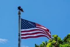 Wanna Be Eagle? Stockbild