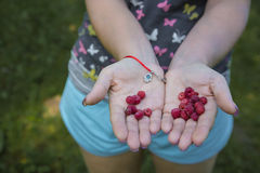 Wanna raspberries? Royalty Free Stock Image