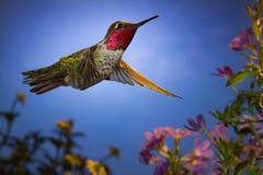 Wanneer de mier een kolibrie ontmoet Royalty-vrije Stock Foto