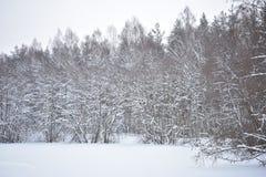Wanneer de winter komt, begrijpt de aard dat het tijd is te ontspannen stock foto