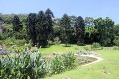 wanshi植物园荷花池  库存照片