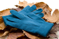 Want Gloves With Foliage Stock Photos