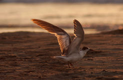 Want to fly with seagulls Stock Images