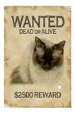 Wanted. Cat poster Royalty Free Stock Photo