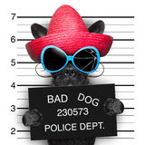 Wanted dog Stock Images