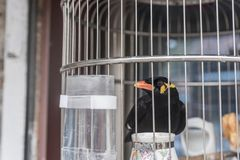 Wanting to be free, a bird that is locked in a small bird cage. Wanting to be free, a bird locked in a small bird cage, taken in Qinhuai District, Nanjing stock images