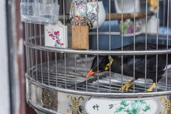 Wanting to be free, a bird that is locked in a small bird cage. Wanting to be free, a bird locked in a small bird cage, taken in Qinhuai District, Nanjing royalty free stock photos