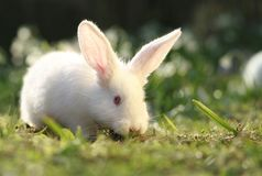 Wantrouwend konijn royalty-vrije stock foto