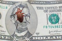 Wanze auf Dollars Grundkäfer auf Fünfdollarschein Geldkäfer lizenzfreie stockfotos