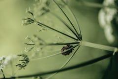 Wanze in einer Blume mit Farbdem ordnen Lizenzfreies Stockfoto