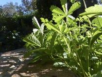 Wanzen-Augen-Ansicht von Gartenpflanzen Stockfotos
