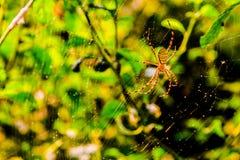 Wanzen-Spinneninsektengliederfüßer lizenzfreies stockbild