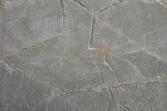 wapień pustynna tekstura Obraz Royalty Free