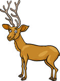 Wapiti deer cartoon illustration Royalty Free Stock Images