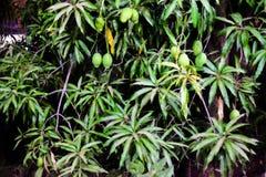 Wapna drzewa zieleń Fotografia Stock