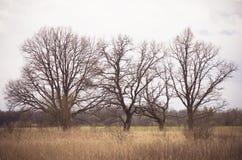 Wapna Drzewo Obrazy Stock