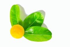Wapno zieleni piłki i liście Obraz Stock