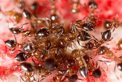 War of ants in nature Stock Photos