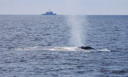 War and Peace - Blue Whale and Navy Ship royalty free stock photo