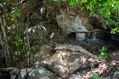 Waran Koh στο νησί Poda Στοκ Φωτογραφίες