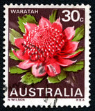 Waratah澳大利亚人邮费 库存图片