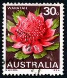 Waratah Australian Postage Stock Image