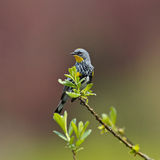Warbler on a branch Stock Photo