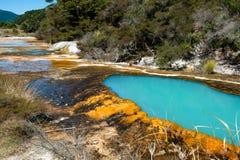 Warbrick terrasser, Waimangu vulkanisk dal Royaltyfria Foton