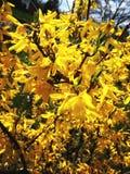 Ware geel royalty-vrije stock afbeeldingen