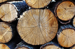 Warehouse cut logs annual rings Royalty Free Stock Images