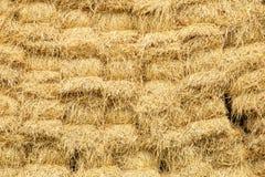 Warehouse of hay Stock Photography