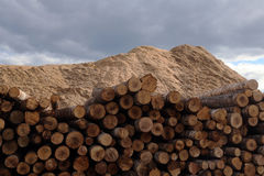 The warehouse of logs Stock Images