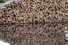 Warehouse of logs Royalty Free Stock Photo