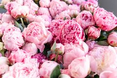 Warehouse refrigerator, Wholesale flowers for flower shops. Pink peonies in a plastic container or bucket. Online store. Floral shop and delivery concept stock photos