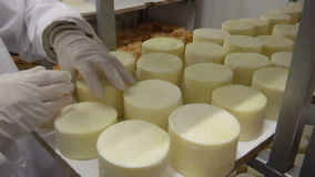 Warehouse for storing cheese stock footage