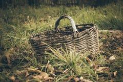 Warenkorb im Herbst Stockfotografie