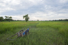 Warenkorb- und Reisfeld Stockbilder