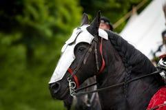 warhorse стоковое изображение