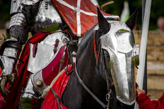 Warhorse Royalty Free Stock Photos