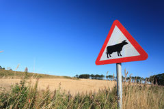 Waring sign for cow in  the countryside in Aberdeen Stock Photo