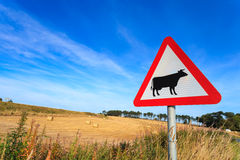 Waring Sign For Cow In The Country Side In Aberdeen Royalty Free Stock Image