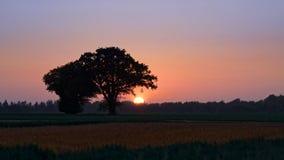 Warkocz na Rolnym polu w Bezchmurnym zmierzchu Obraz Royalty Free